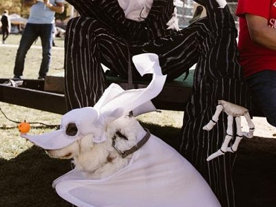 Howl-o-Ween Pet Costume Contest