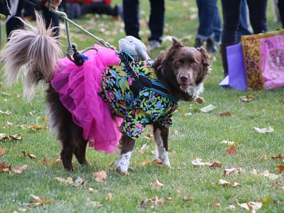 Howl o Ween Pet Costume Contest Photos!